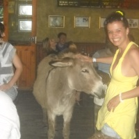 So, a donkey walks into a bar and orders a Coke...
