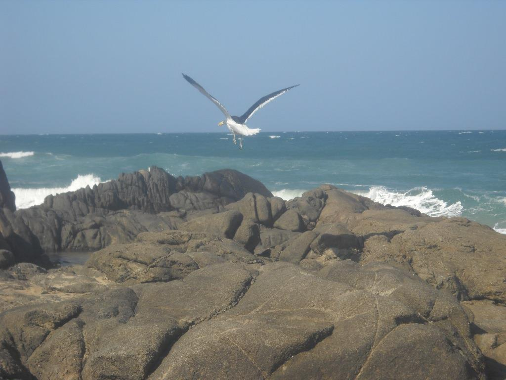 Taken from Marina Beach, South Africa